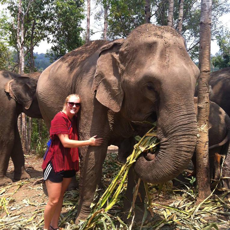 Elephant Jungle Sanctuary in Chiang Mai, Thailand