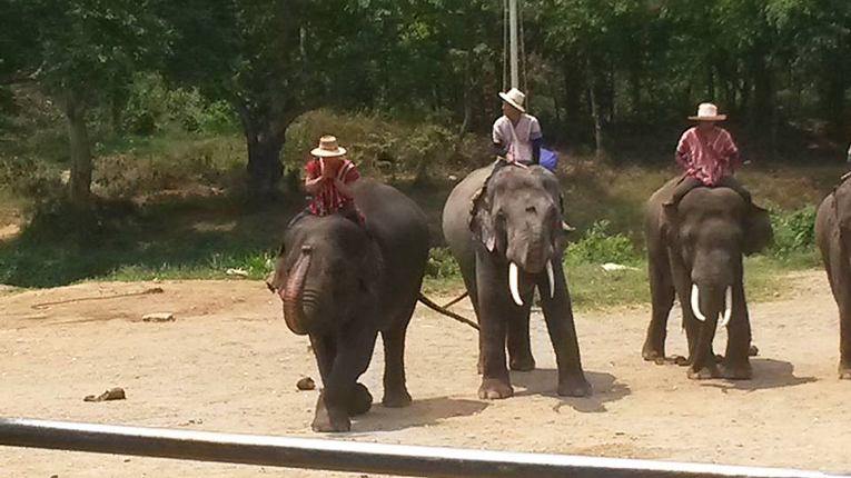 Elephants during a show in Chiang Mai, Thailand
