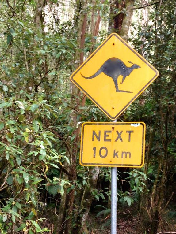 A kangaroo warning street sign in Australia