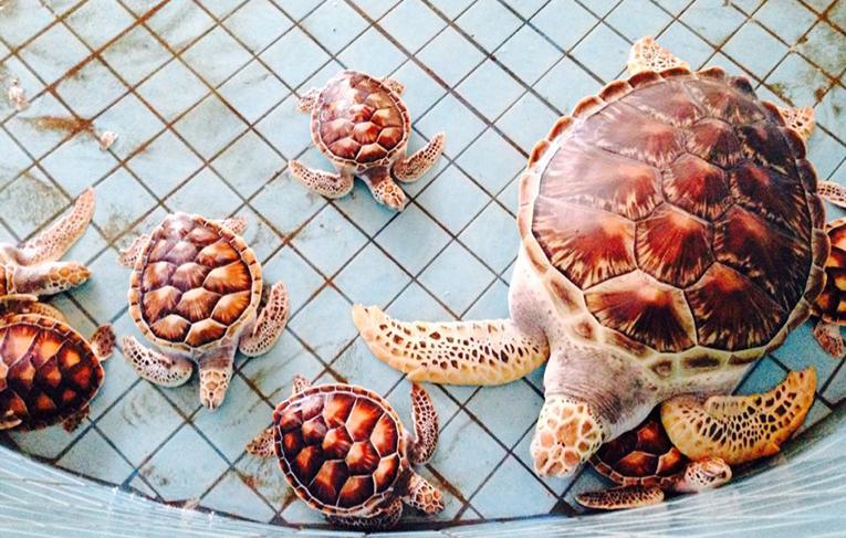 Turtles preparing for a bath in Thailand