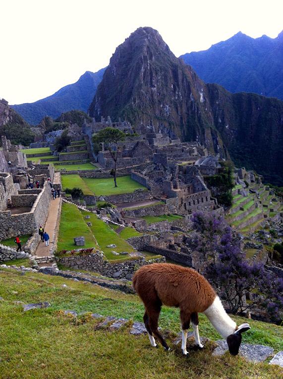 Overlooking Machu Picchu in Peru