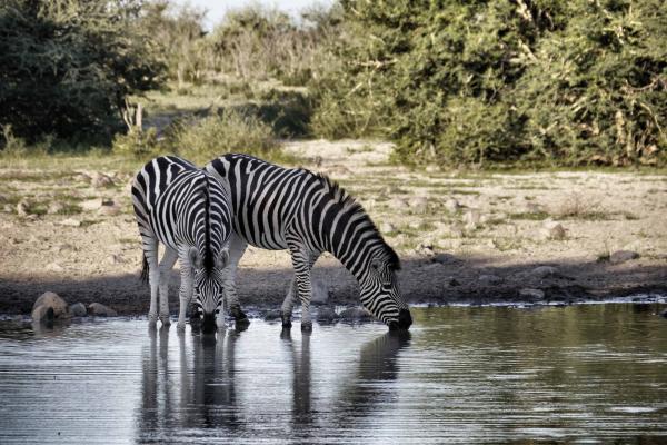 Wildlife volunteering in Africa, Botswana
