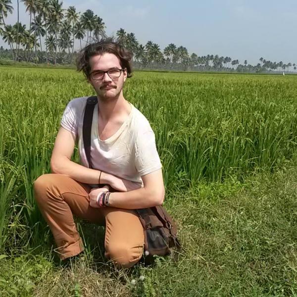 Paddy fields of Kerala