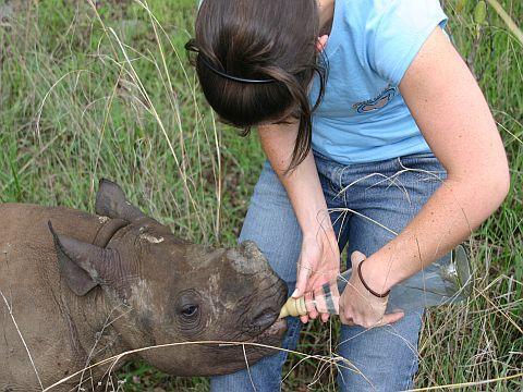 A volunteer feeding a baby rhino