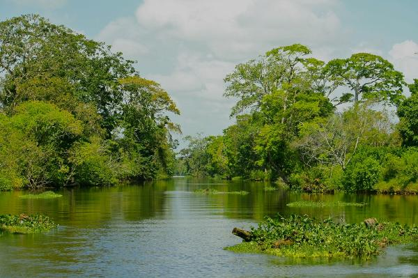 tropical island biodiversity studies in panama