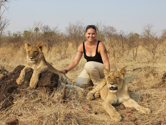 a volunteer with 2 lionesses