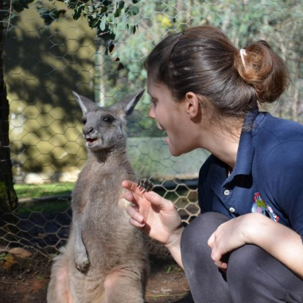 Oceans 2 Earth Volunteers Foundation Volunteering with Australian Wildlife Wallaby