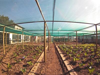 Photo taken by a Projects Abroad volunteer of the local greenhouse. Cape Town, South Africa