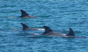 Volunteer with Dolphins in Australia | Travellersworldwide.com