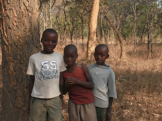 African boys standing beside a tree