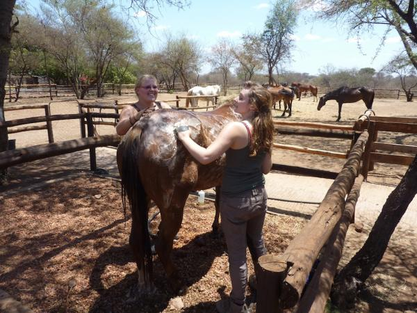 Equine Care