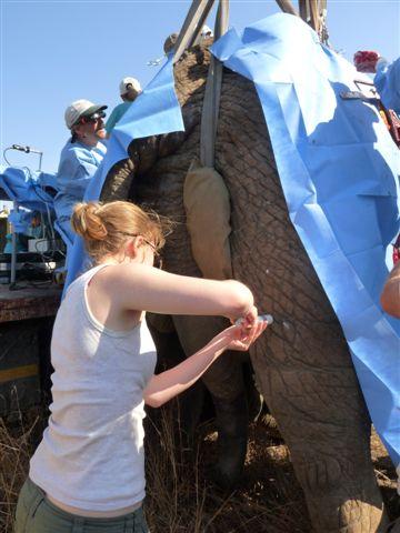 Treating Elephant