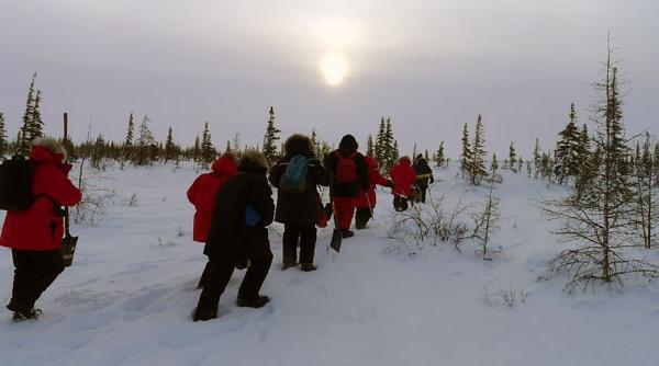 Climate Change Arctic