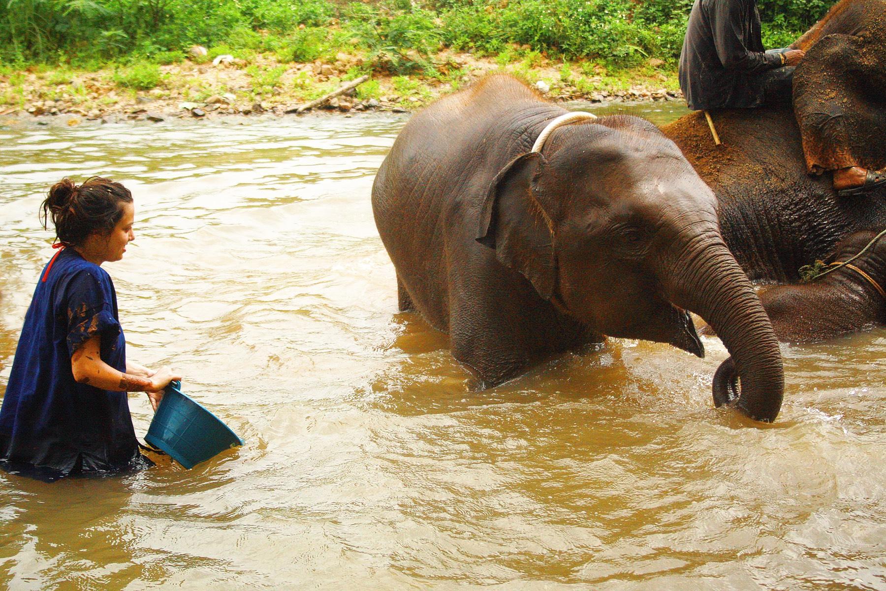 vounteer with Elephants in Thailand