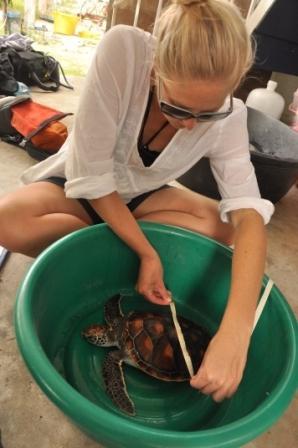 Measuring turtles