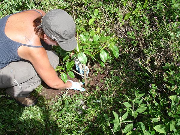 Galapagos Islands Conservation, Reforestation, Ecuador | travellersworldwide.com