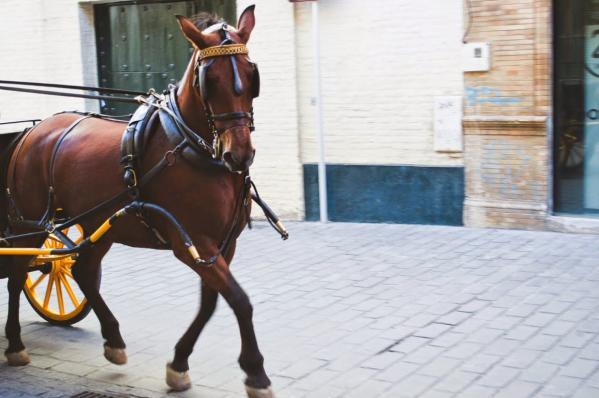 horse and carriage on cobblestone streets in seville spain