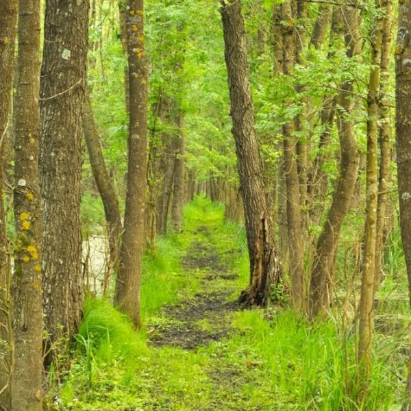 wetland habitat, drava region, conservation, landscape, amazon of Europe