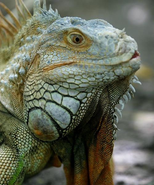 Wildlife sanctuary, Thailand