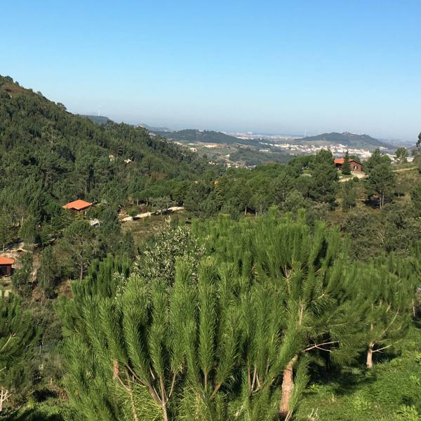 A beautiful green view in Portugal