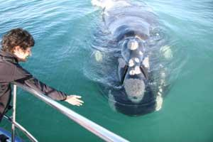 Multi-Marine Project: Whales, Sharks, Dolphins South Africa | Travellersworldwide.com