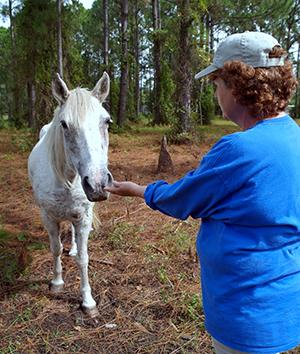 Volunteer to care for rescued wild Mustang horses in Florida, USA