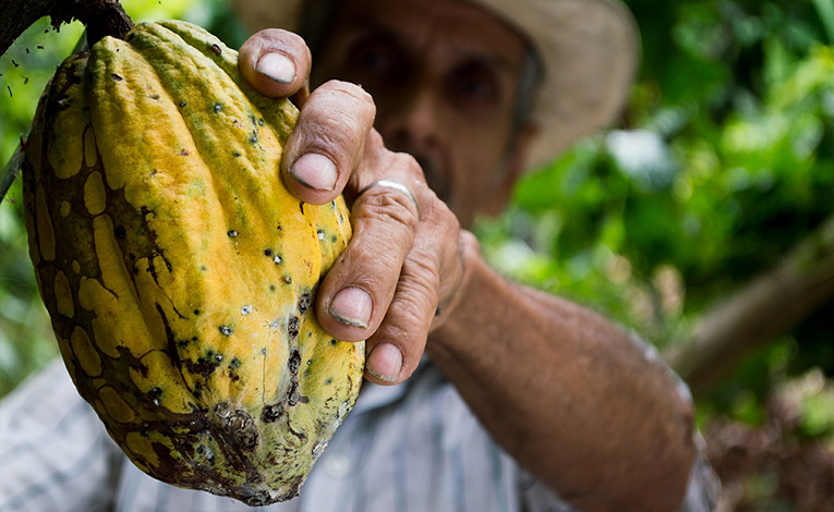 Man holding cacao in plantation