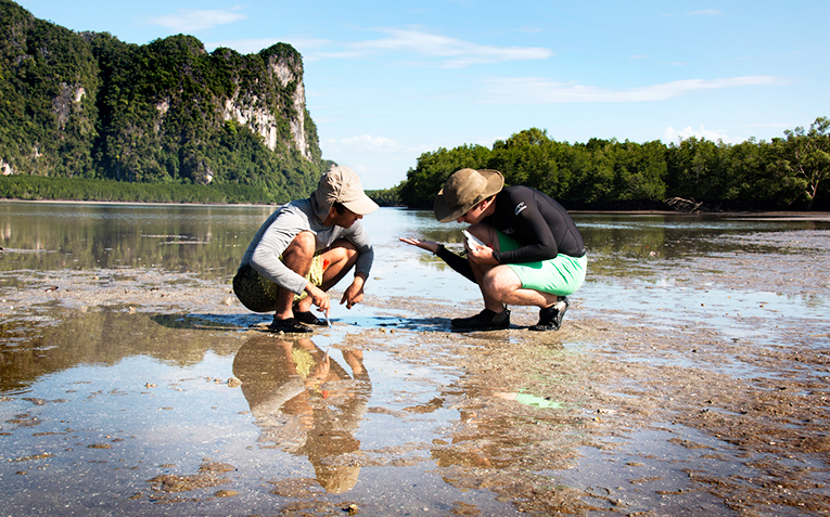 Students study the diverse eco-system of a mudflat in Southern Thailand