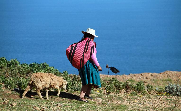 A woman with her sheep in near Lake Titicaca in Peru