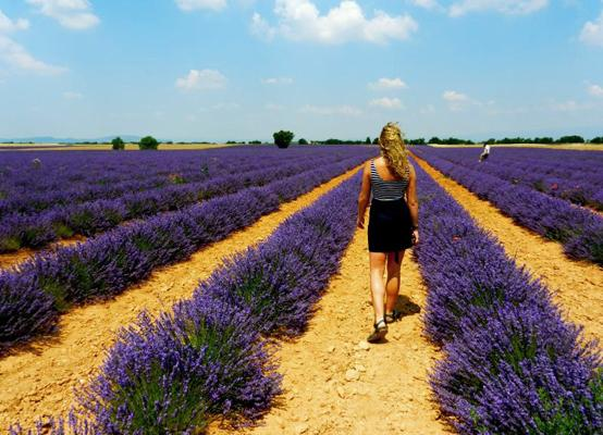 Girl walking through a lavender field in Aix en Provence, France