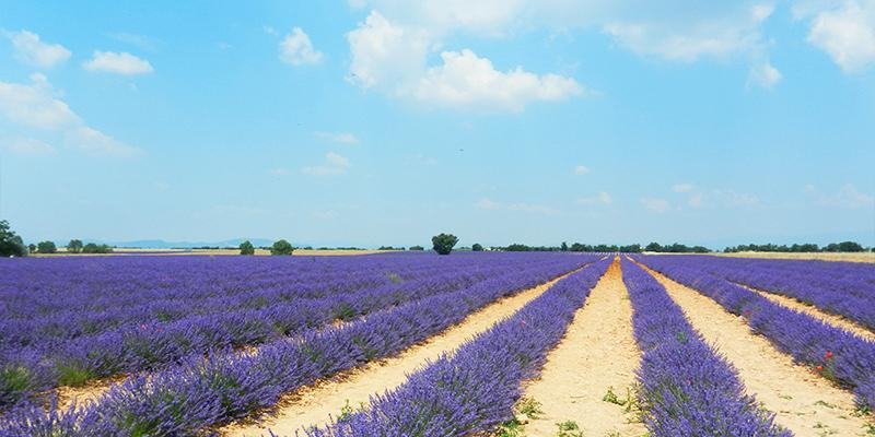 Enjoy the view and the scent of the lavender field in Aix-en-Provence