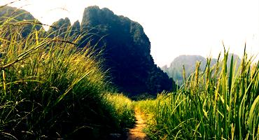One of the Trails Passing Through the Beautiful Countryside of Laos.