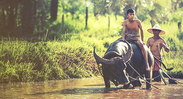 Two farmers with a carabao in a field.