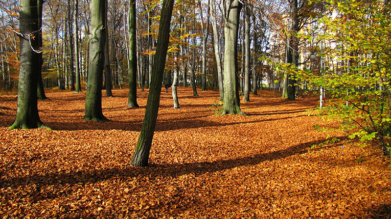 Forest in Poland dusted with bright orange leaves