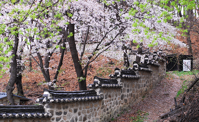 Blossoms in Daejeon-Uam Historical Park in South Korea