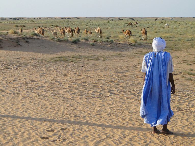 A man herding camels in Mauritania