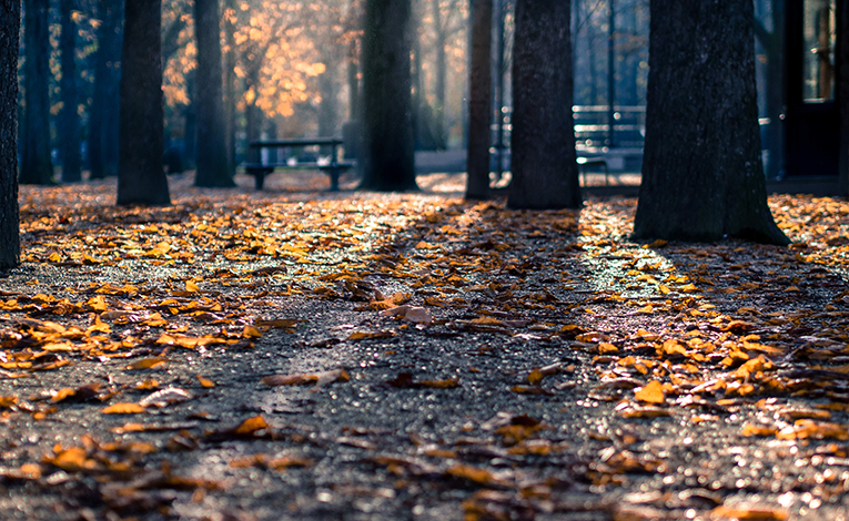 Fallen leaves on the ground in a park
