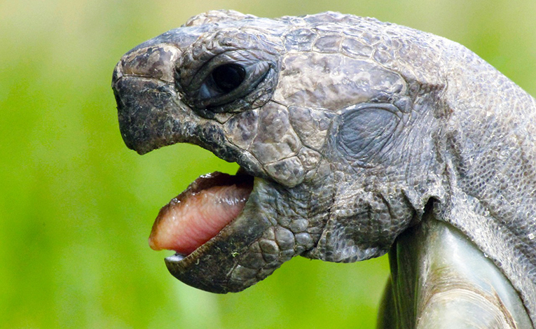 Turtle making ugly face