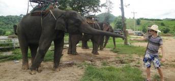 Elephant trekking tours