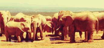 Elephants are social animals, as some visiting teachers to South Africa notice
