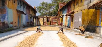 Ginger Warehouse in India