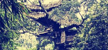 A large tree house in Laos