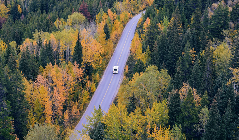 Birds eye view of a car driving through a forest