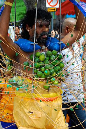 There are many Indian festivals that celebrate the rice harvest, the stars and light. Among these, Thaipusam is by far the most spectacular. These devotees have their tongues and cheeks skewered with long silver needles and metal hooks pierced to their ch
